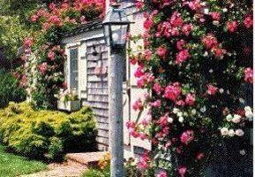 Luxury Rose Covered Cottage - Siasconset, Nantucket, MA - Cape Cod - Nantucket MA Vacation Rental